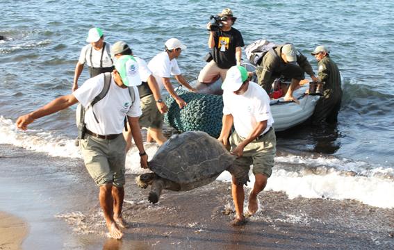 Giant Tortoise Restoration Intiative.  Photo: Galapagos Conservancy