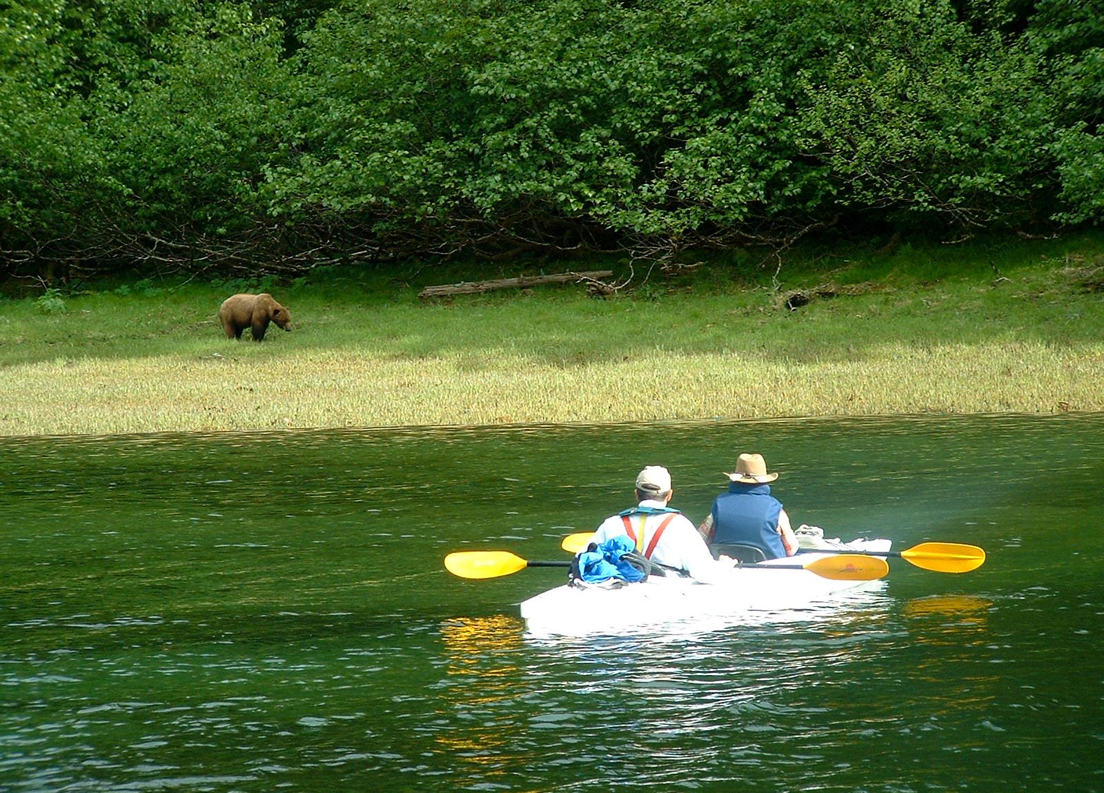 Silently kayaking while bear watching