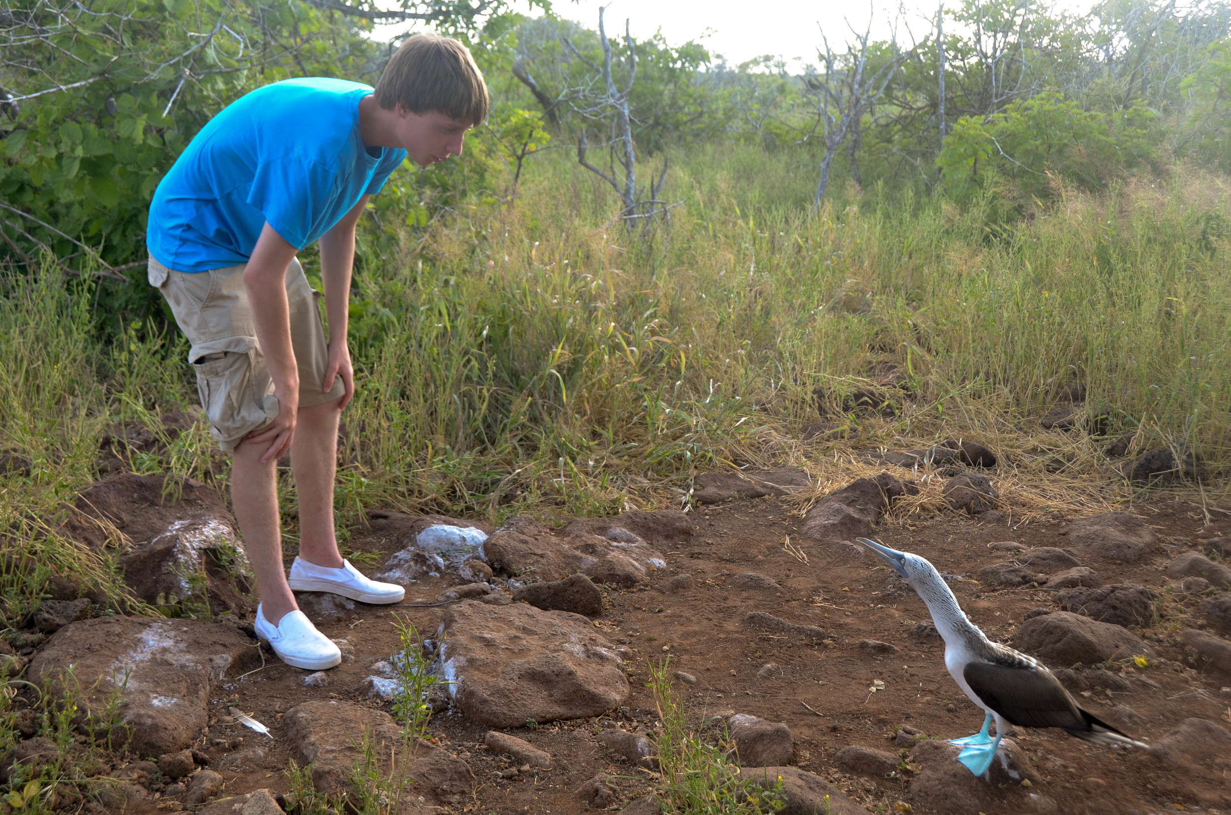 Priceless face to face encounter between guest and blue-footed Booby. Photo: Marika Roberson