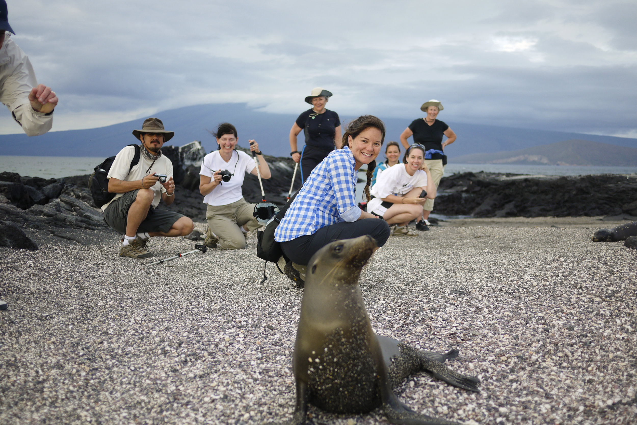 Group_sealion_PtaEspinoza_Fernandina_Phil_Yip.jpg