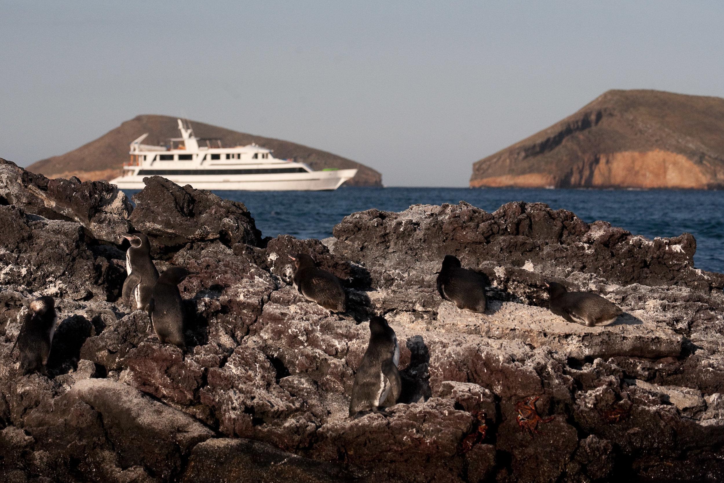 Penguins of Sombrero Chino