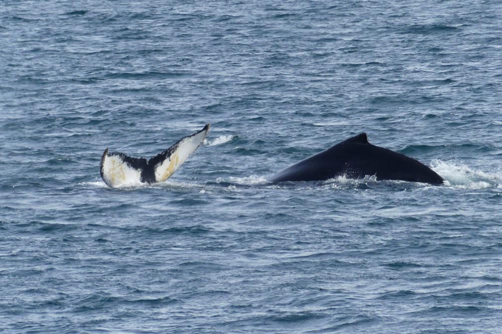 whales_antarctica_richard_polatty.jpg