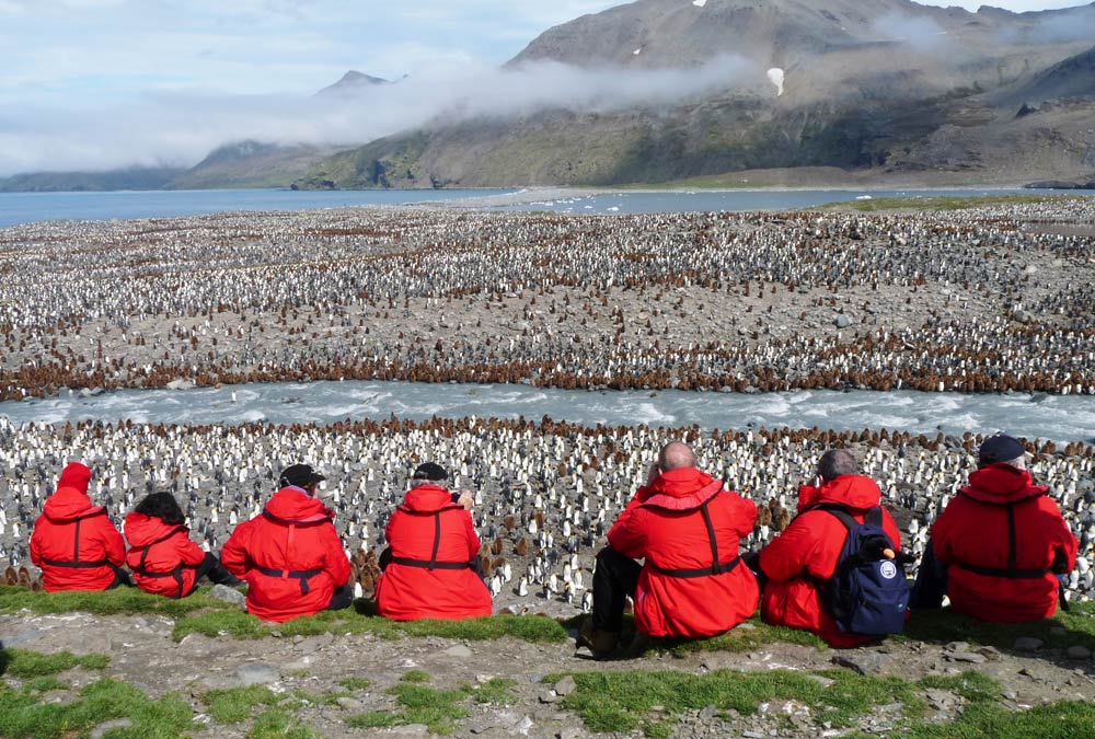 Viewing the massive King Penguin rookery
