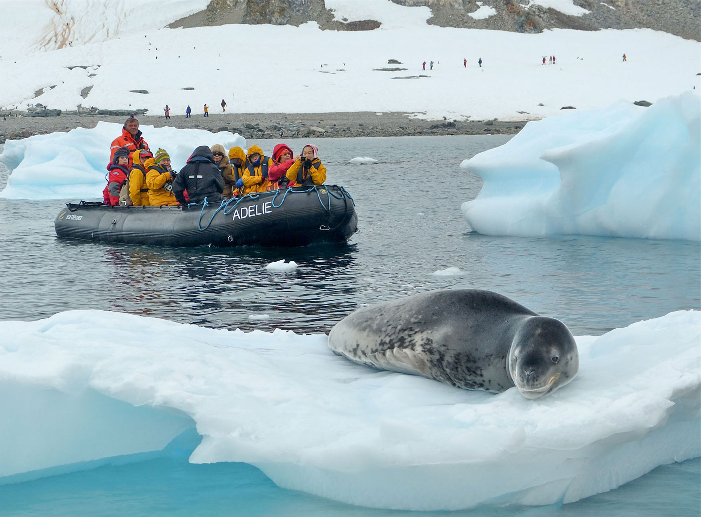Leopard seal from the zodiac
