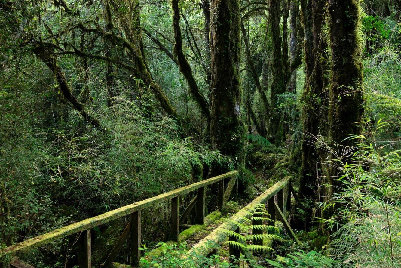 valdivian-rainforest.jpg