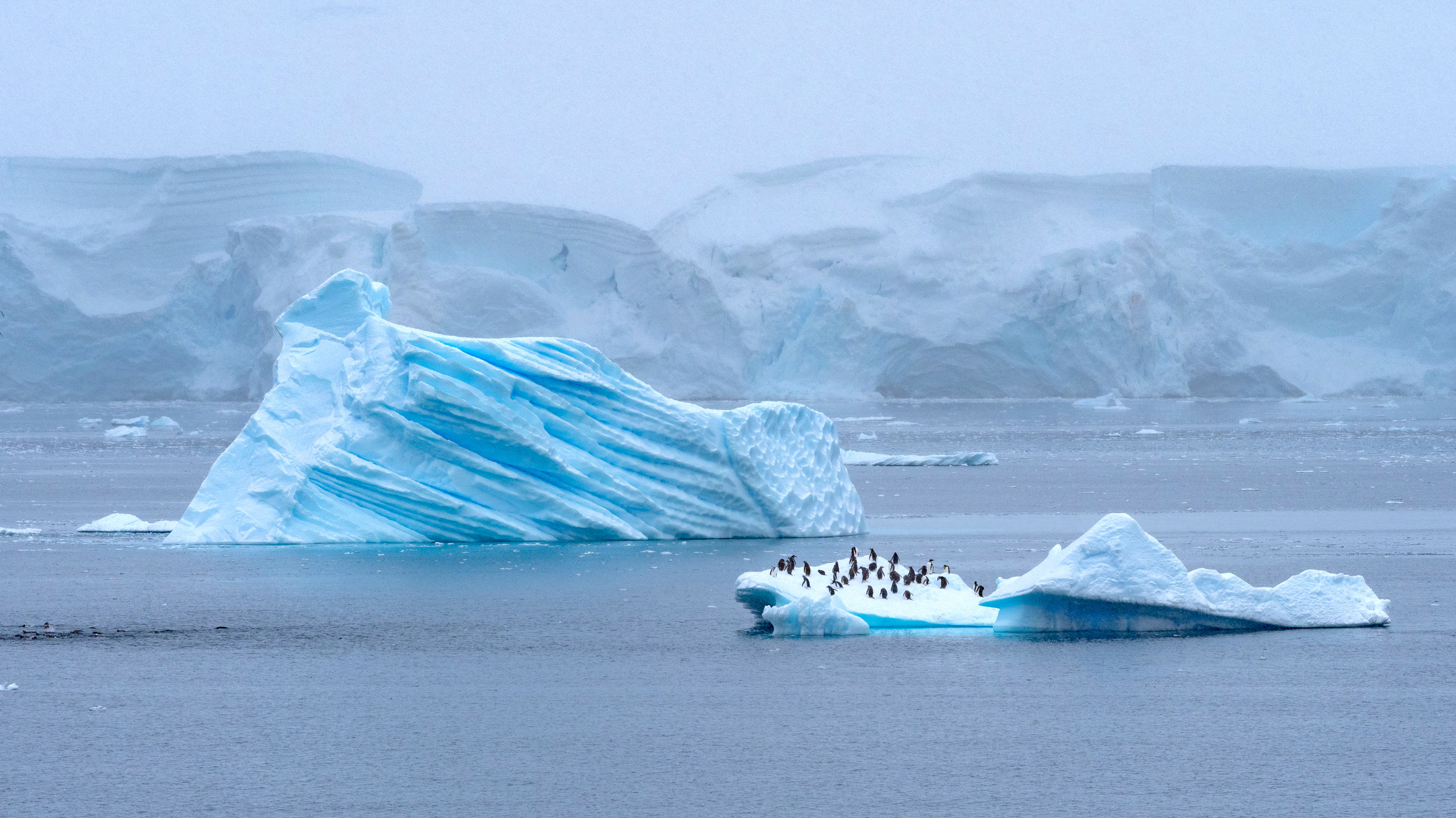 Hitching a ride on an iceberg