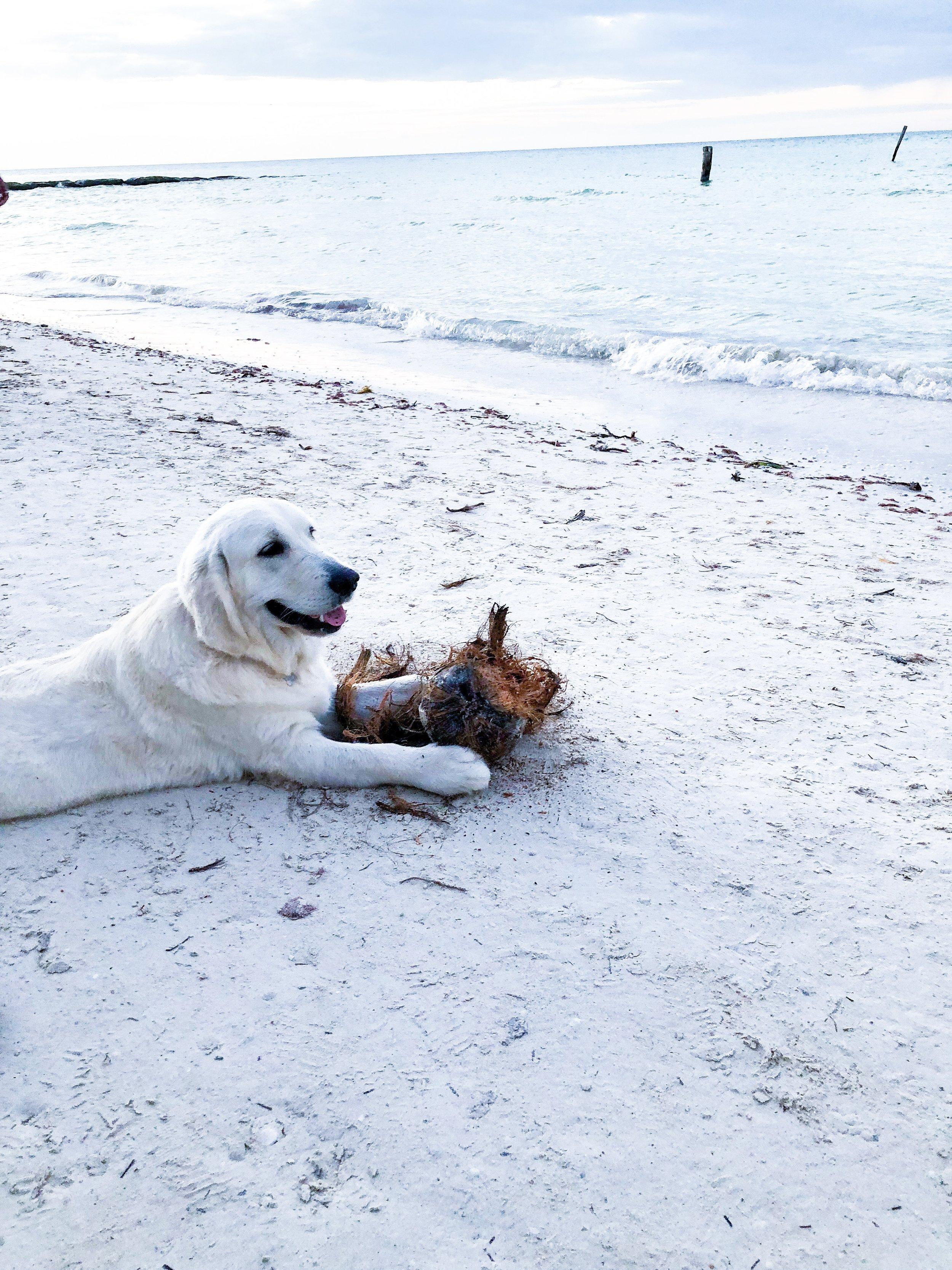 So many pups on the island! I was dying. - Isla de Holbox, Mexico