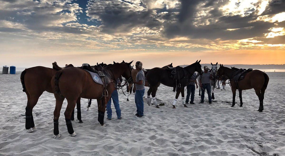 The horses between chukkers.jpg