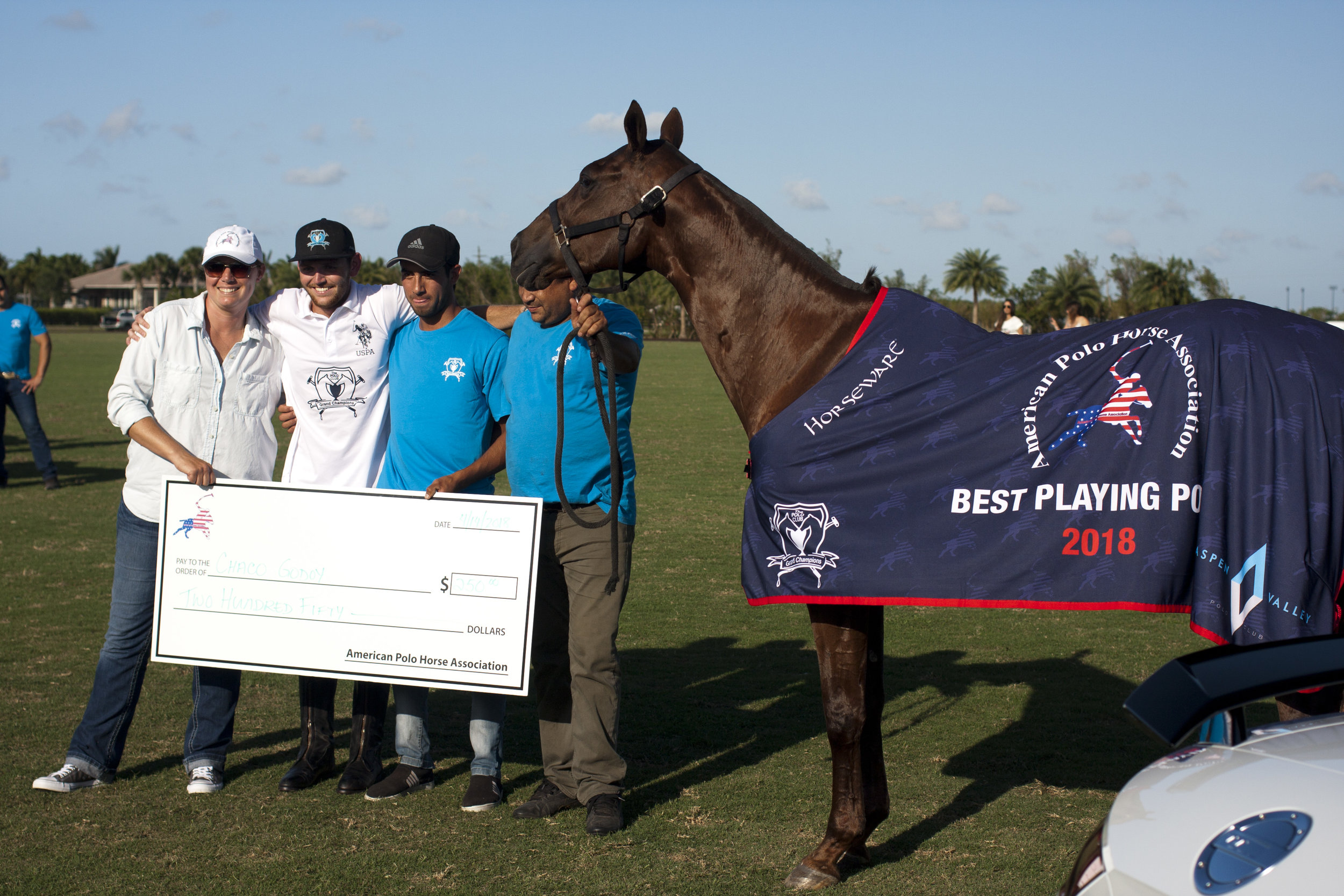 Chaja, the American Polo Horse Association best re.JPG