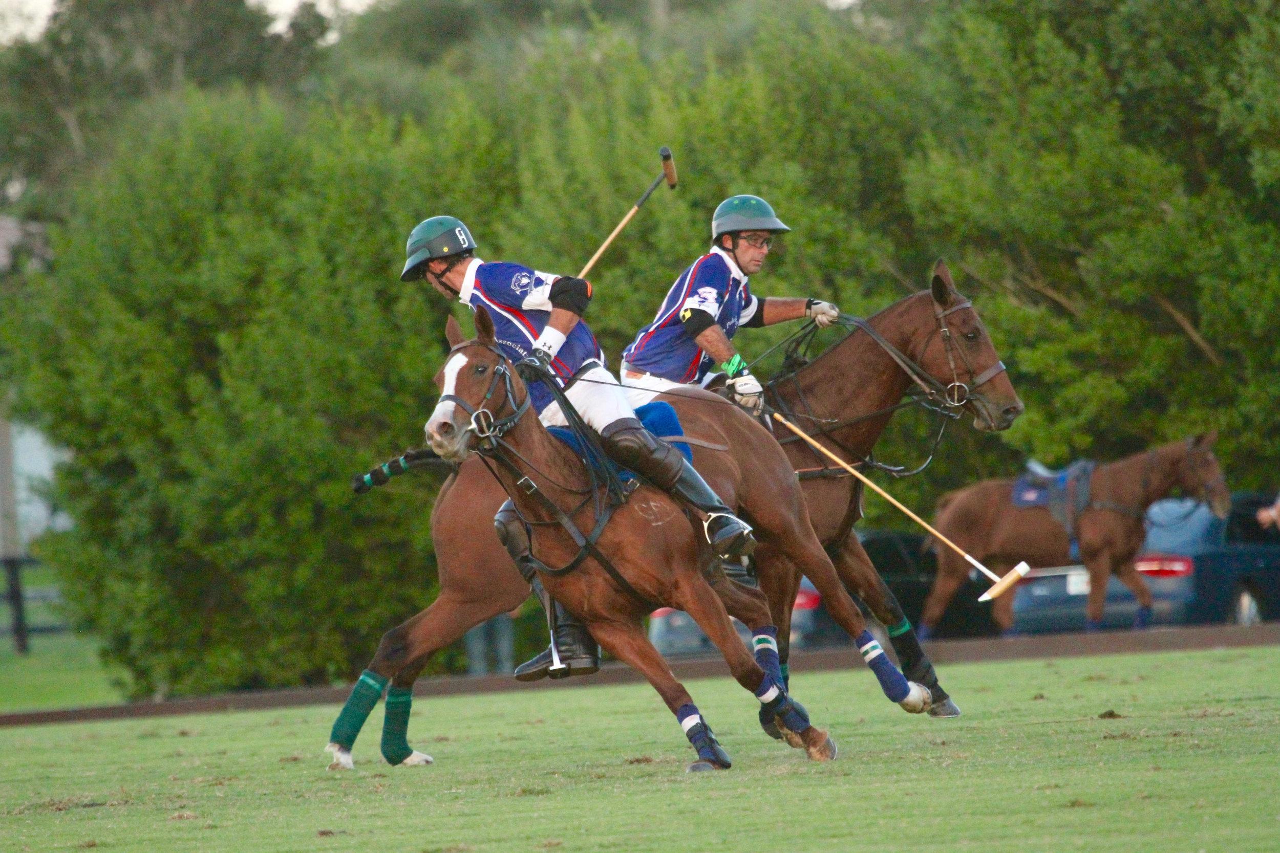 American Polo Horse teammates Whis.jpg
