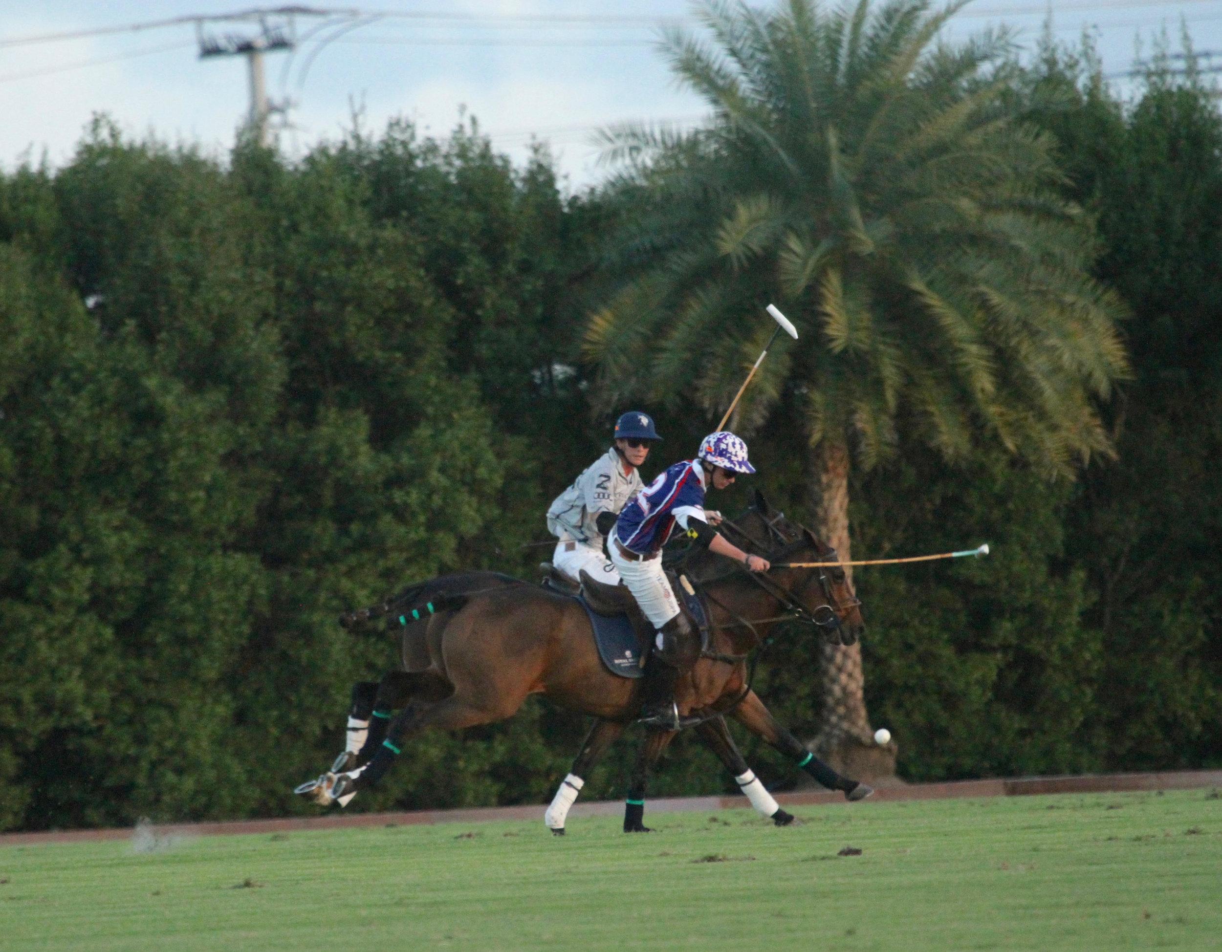 Tony Calle of American Polo Horse wo.jpg