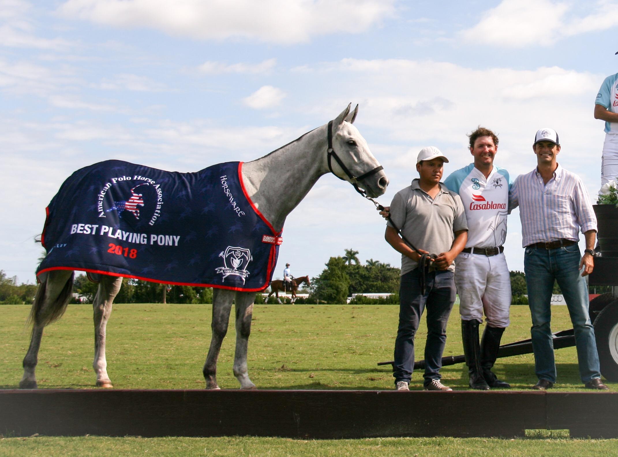 American Polo Horse Association B).jpg