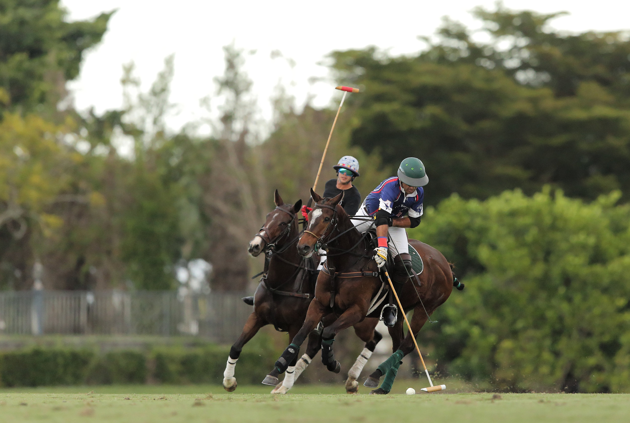 Whistle Uys of American Polo Horse p.jpg