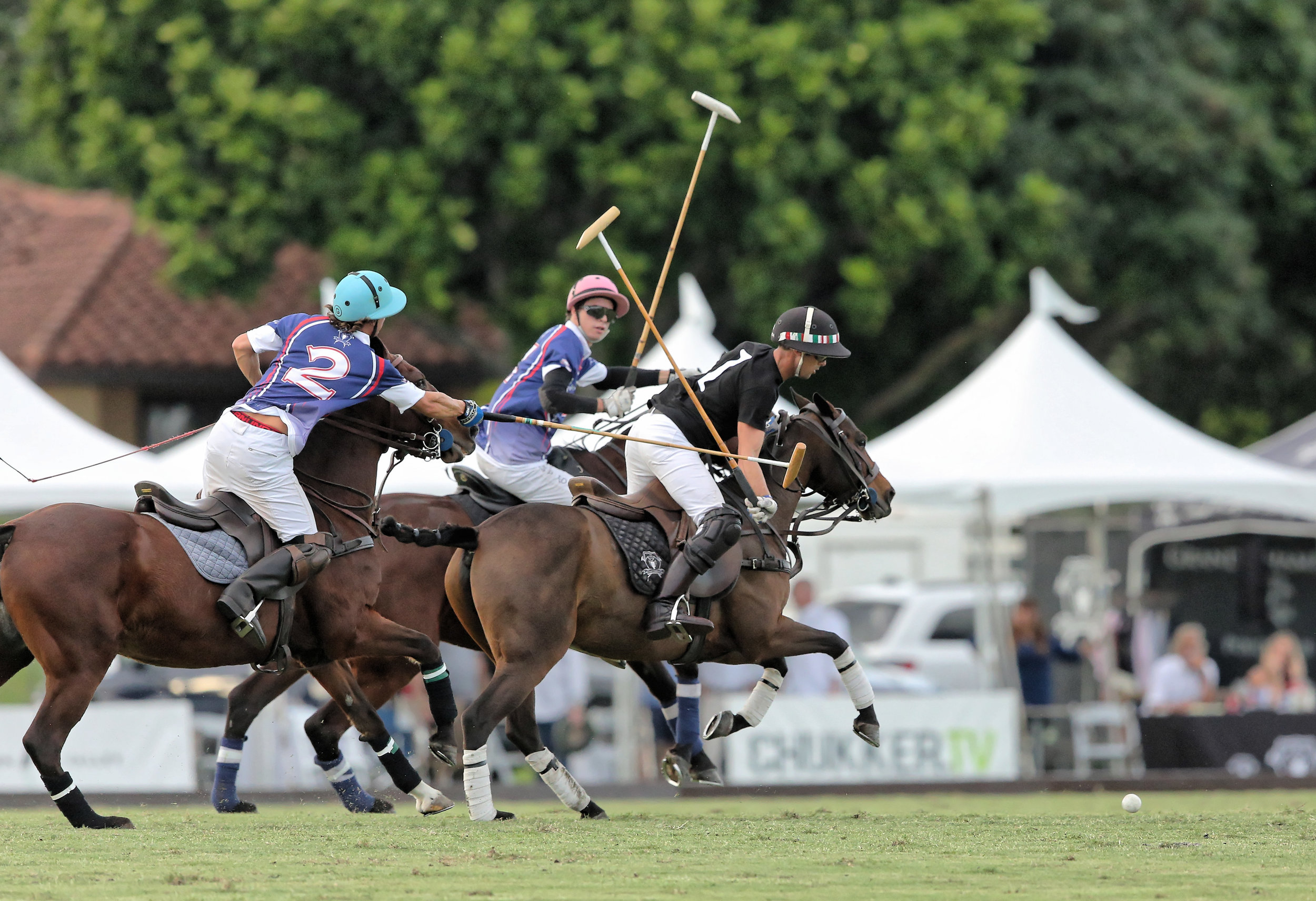 Weston Gracida of American Polo Horse att.jpg