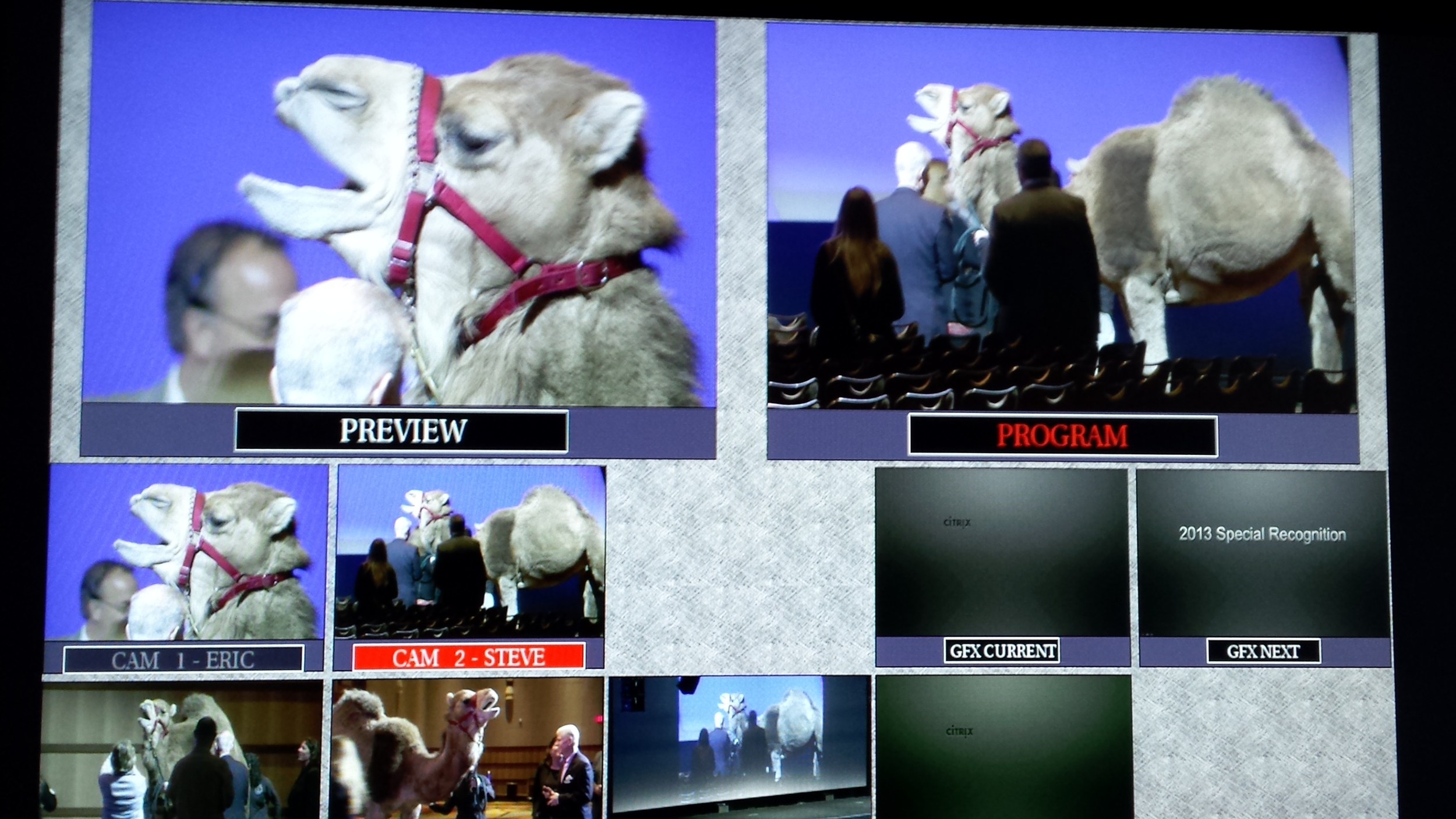 Multi-viewer screen shows how many ways you can shoot a camel!