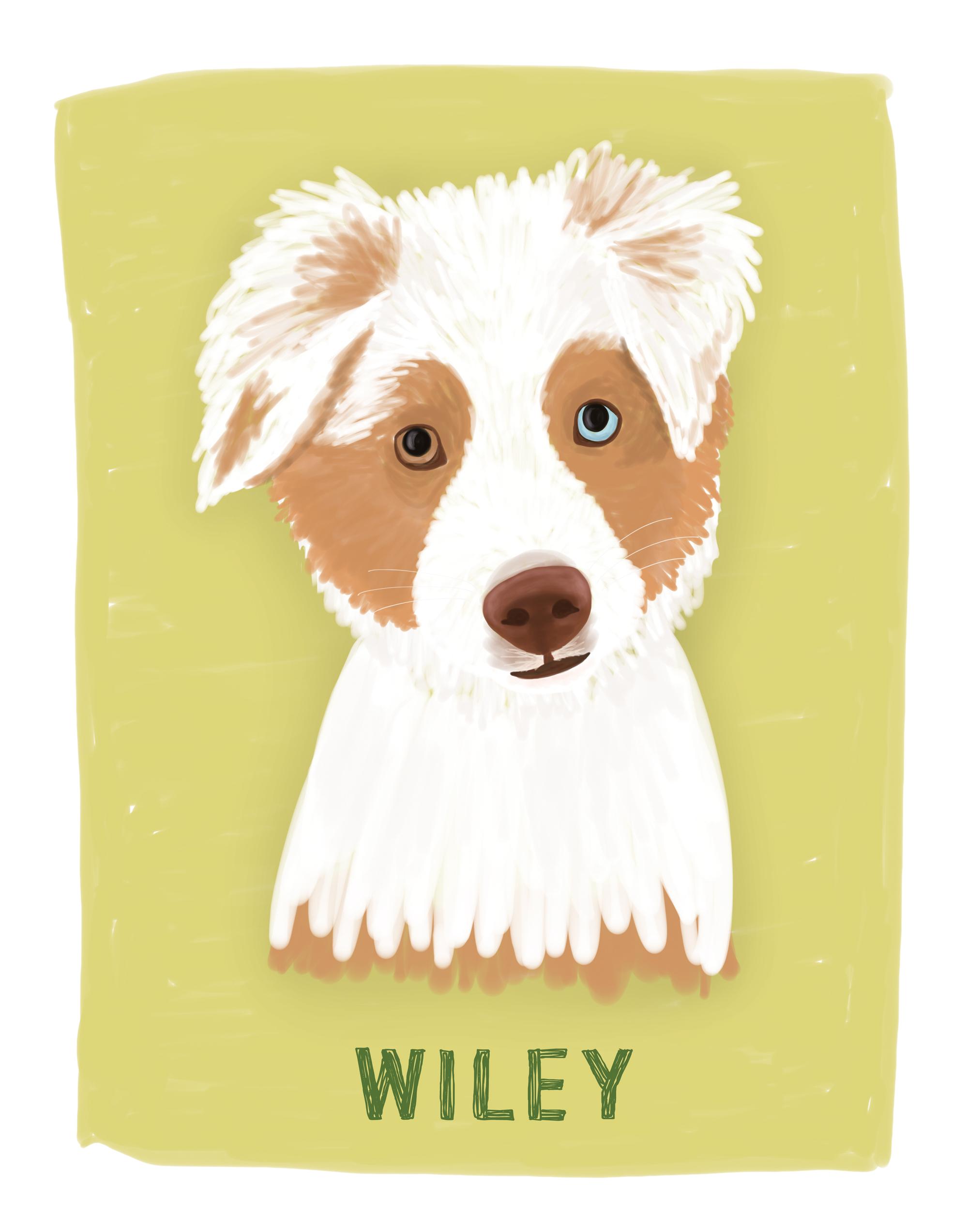 Wiley-Dog-Portrait.jpg