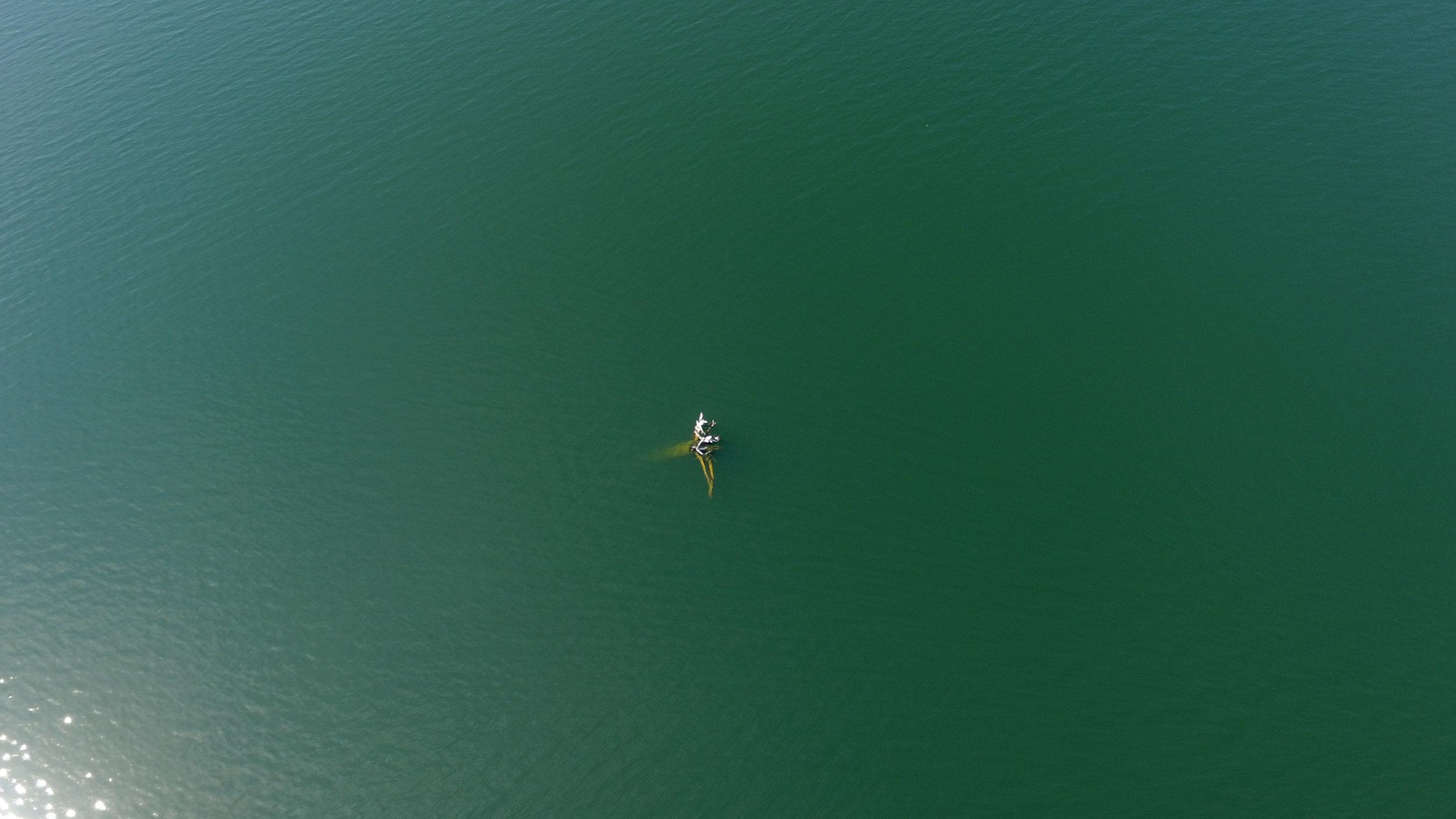 Floating Log in Owhi Lake