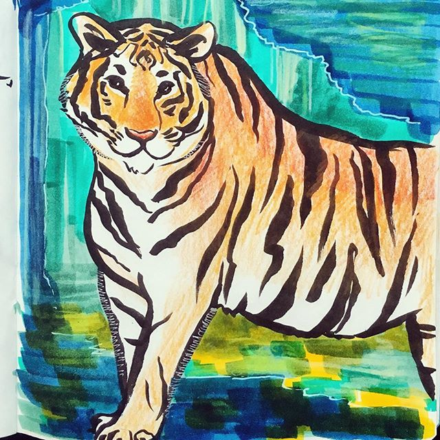 I'm so happy to be back in #brooklyn after a long #corporate jog in #kc ... Here is a drawing of a tiger because you know how it is with #illustrators and #tigers #amiright 🐅 #illustration #sketchbook #tiger #coloredpencil #rawr #instaart