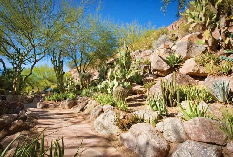 Cactus Garden, Featuring Over 27 Cactus Varieties