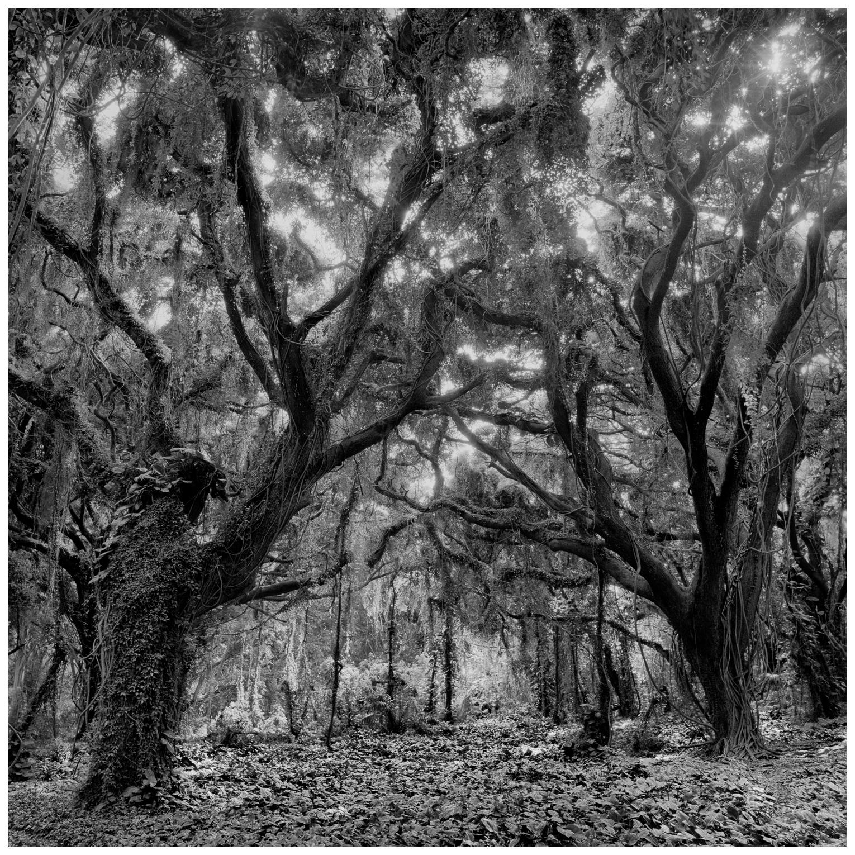 04Honolua Sun Thru Two Trees, 150-11.jpg