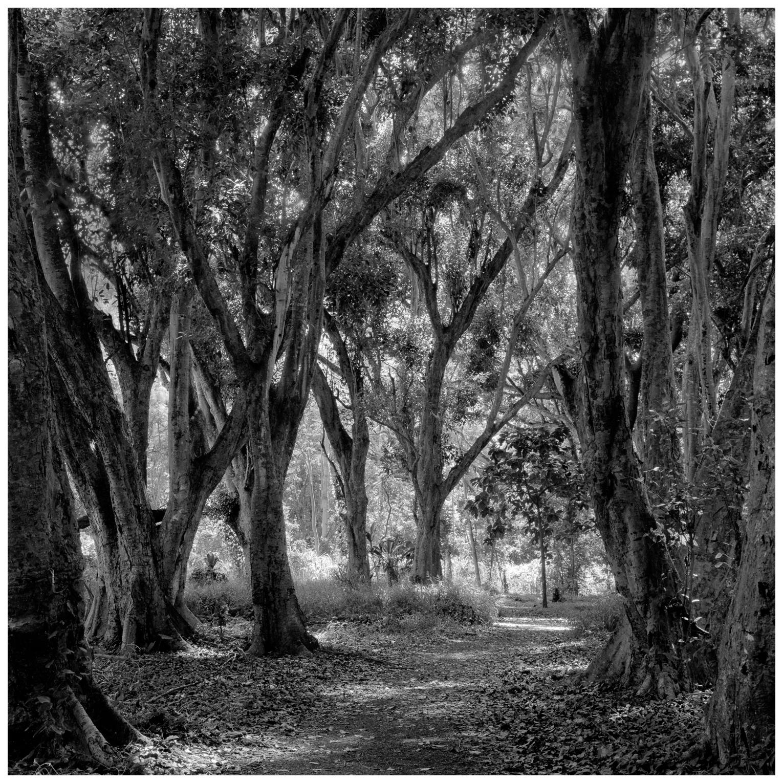 05Honolua Path, 150-1.jpg