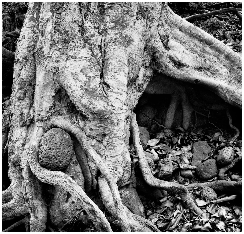 11Honolua Roots and Rock 16, 170-2.jpg