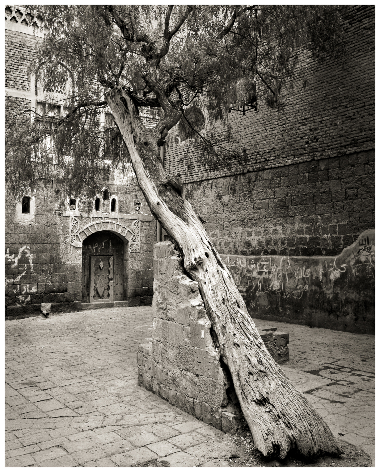 11Ancient Courtyard, Sana'aSupported Tree_DSC1997.jpg