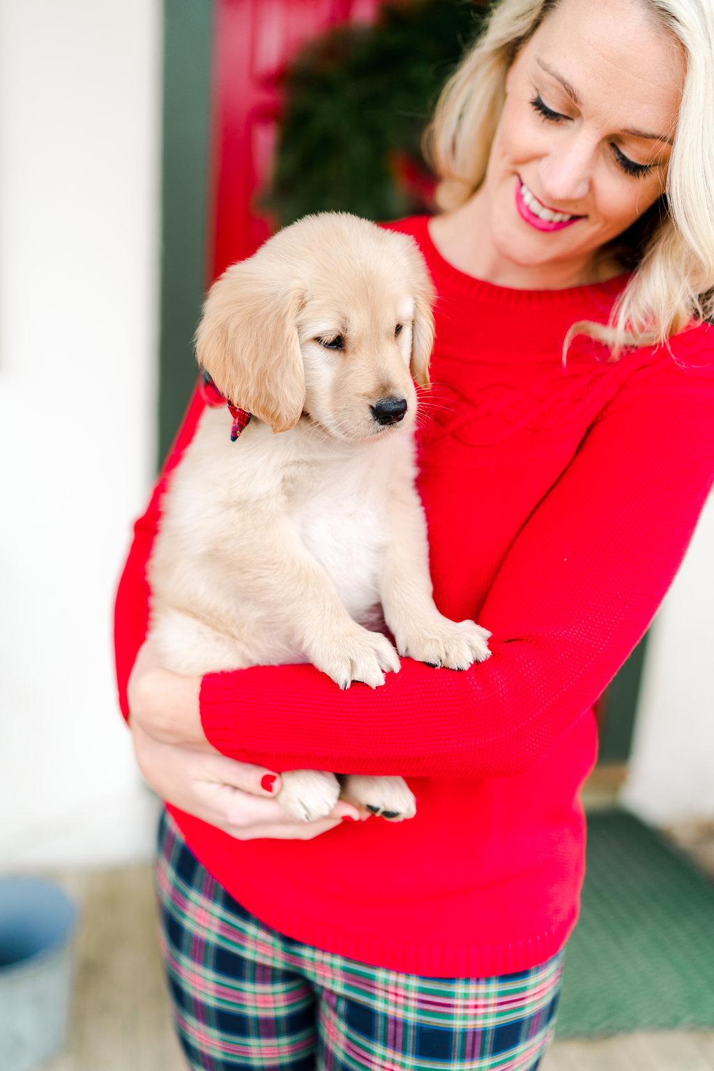 Vermont Ski House Chalet Golden Retriever Puppy