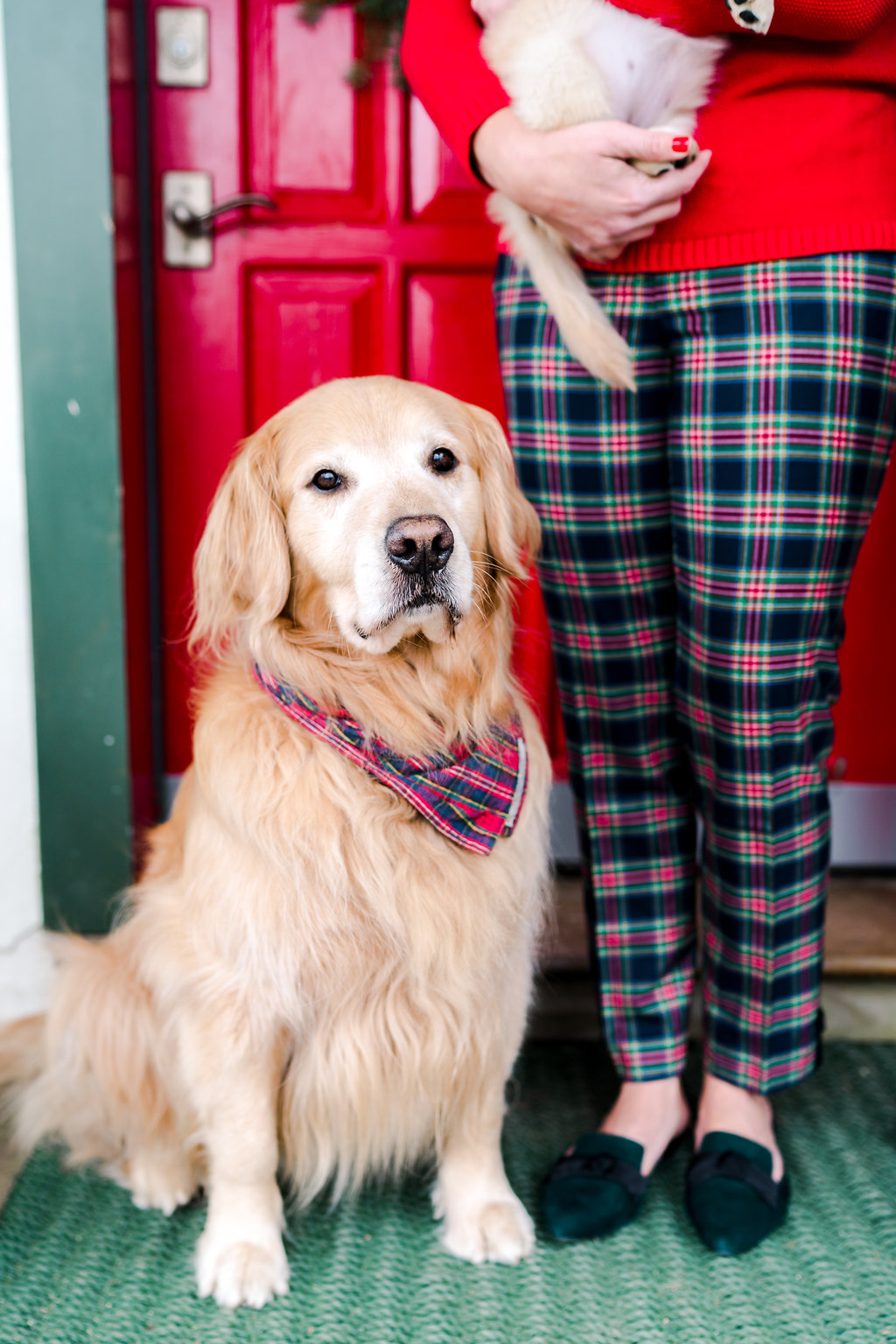 RODEOCOPHOTO_AbbyCapalbo_December_-15.jpgVermont Ski House Chalet Golden Retriever Puppy