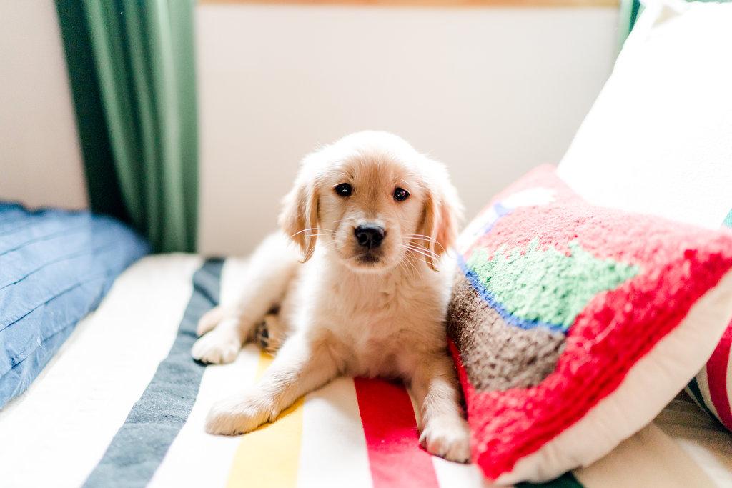 Vermont Ski House Design Bedroom Golden Retriever Puppy