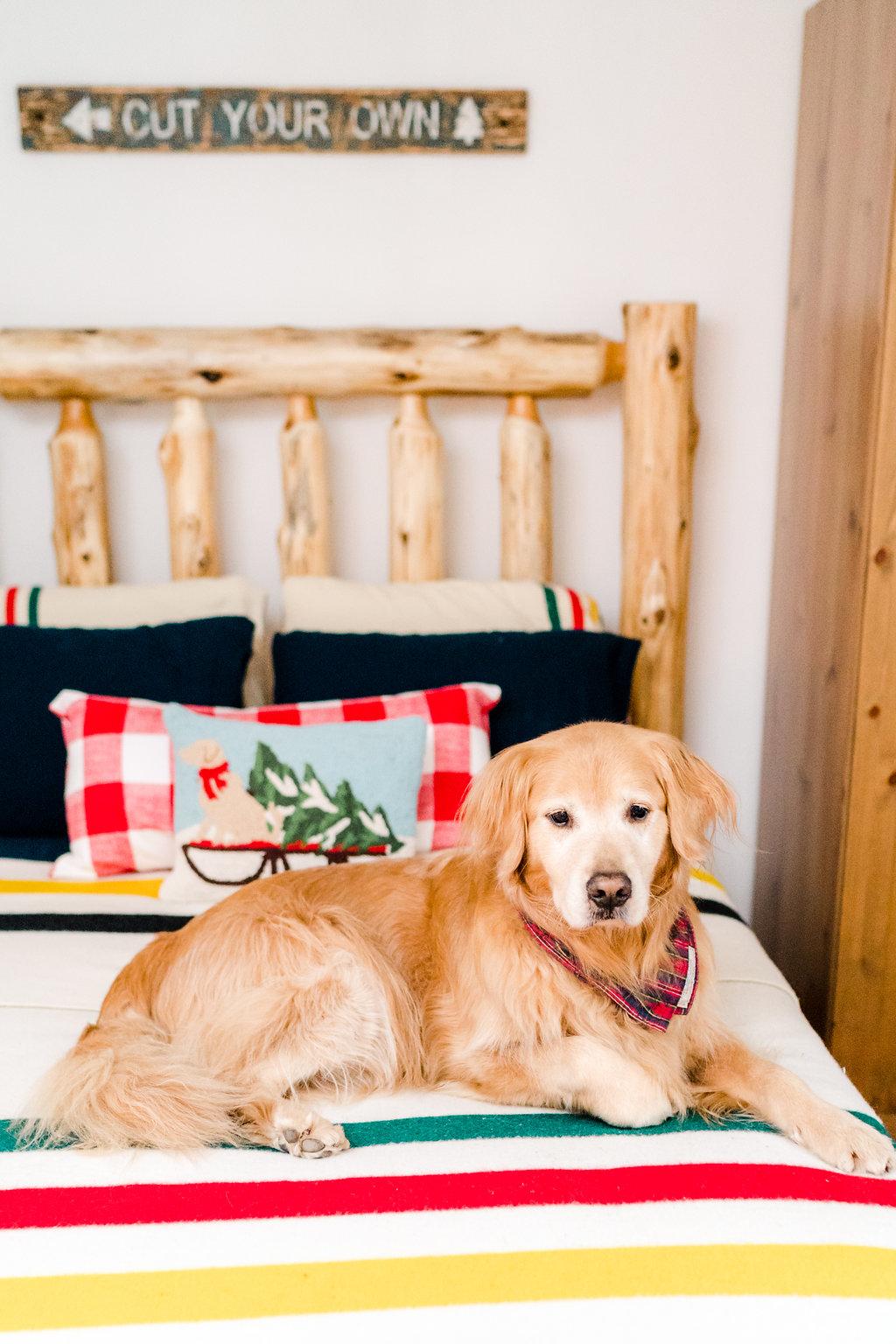Vermont Ski House Design Golden Retriever
