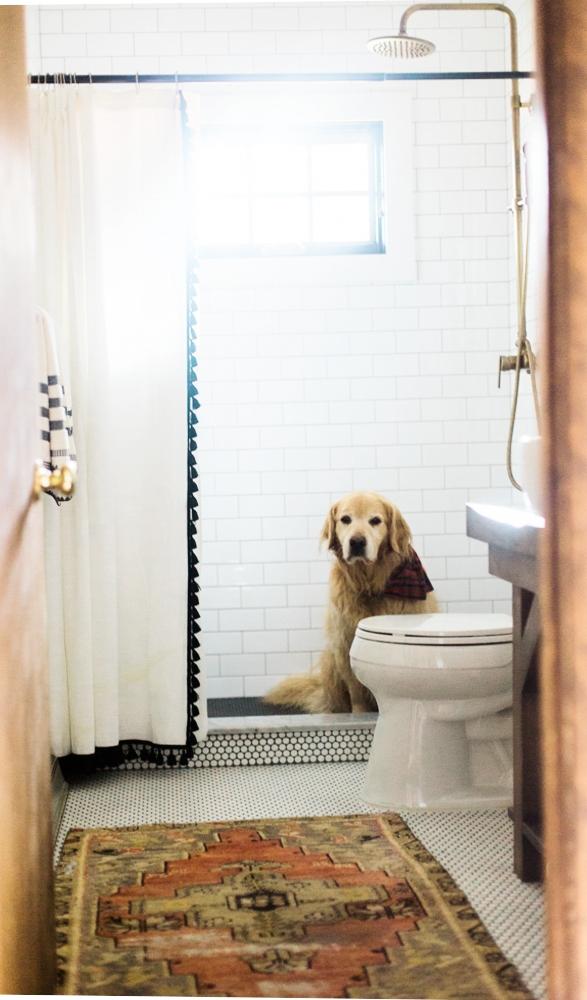 Vermont Golden Retriever bathroom