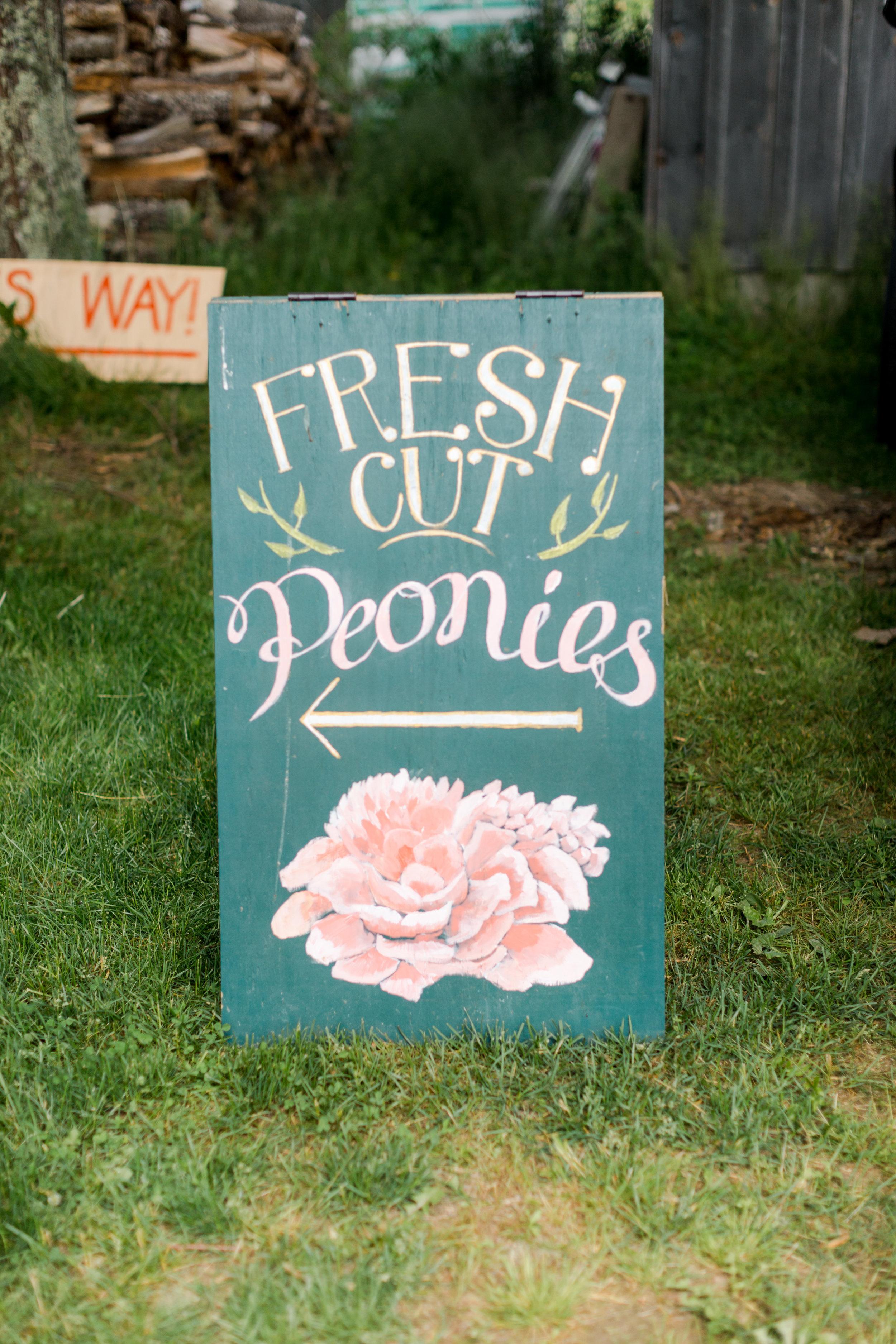 Peony Farm in Little Compton, Rhode Island from Abby Capalbo | Photography: Erin McGinn