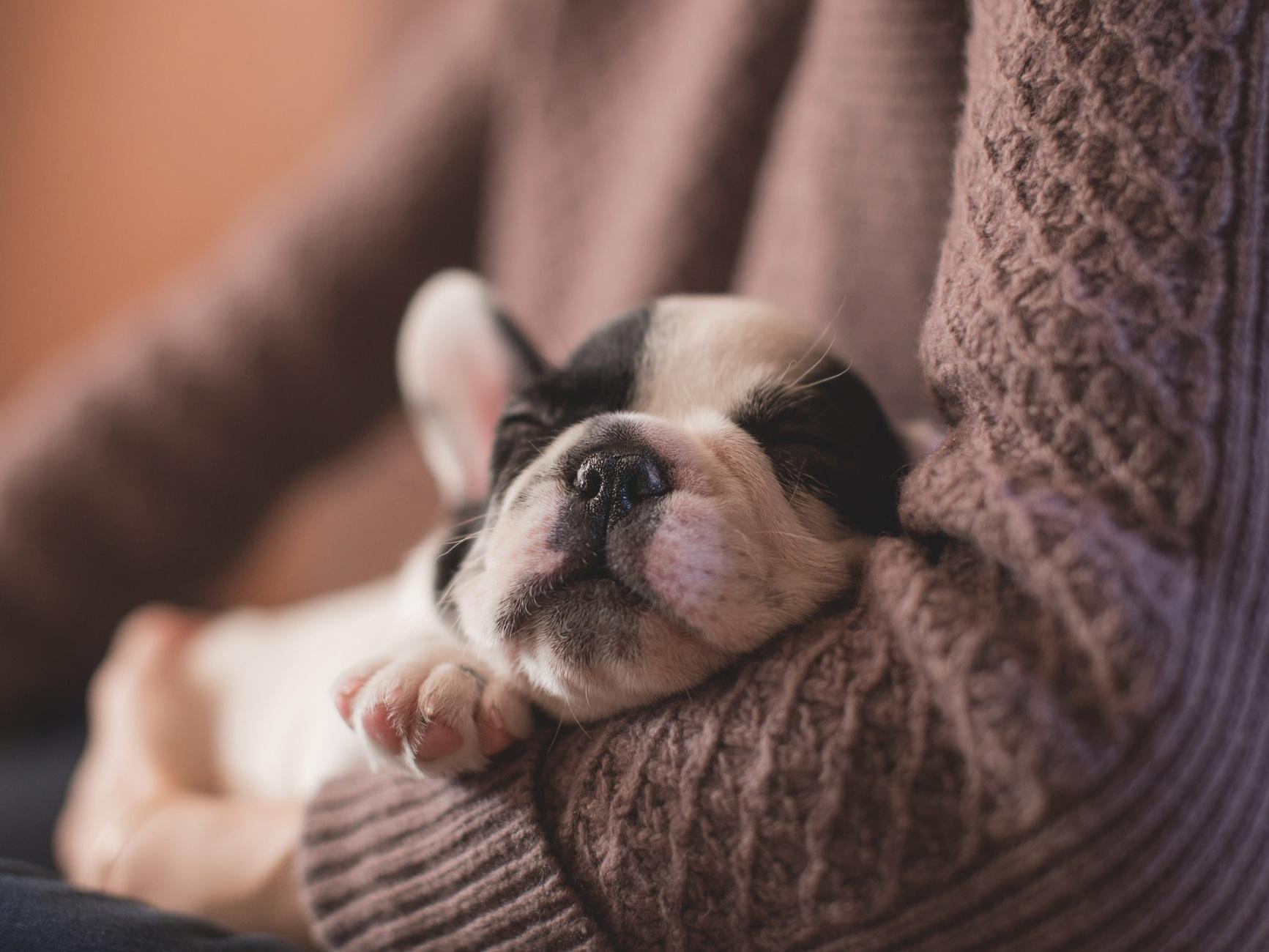 puppy+sleep.jpg