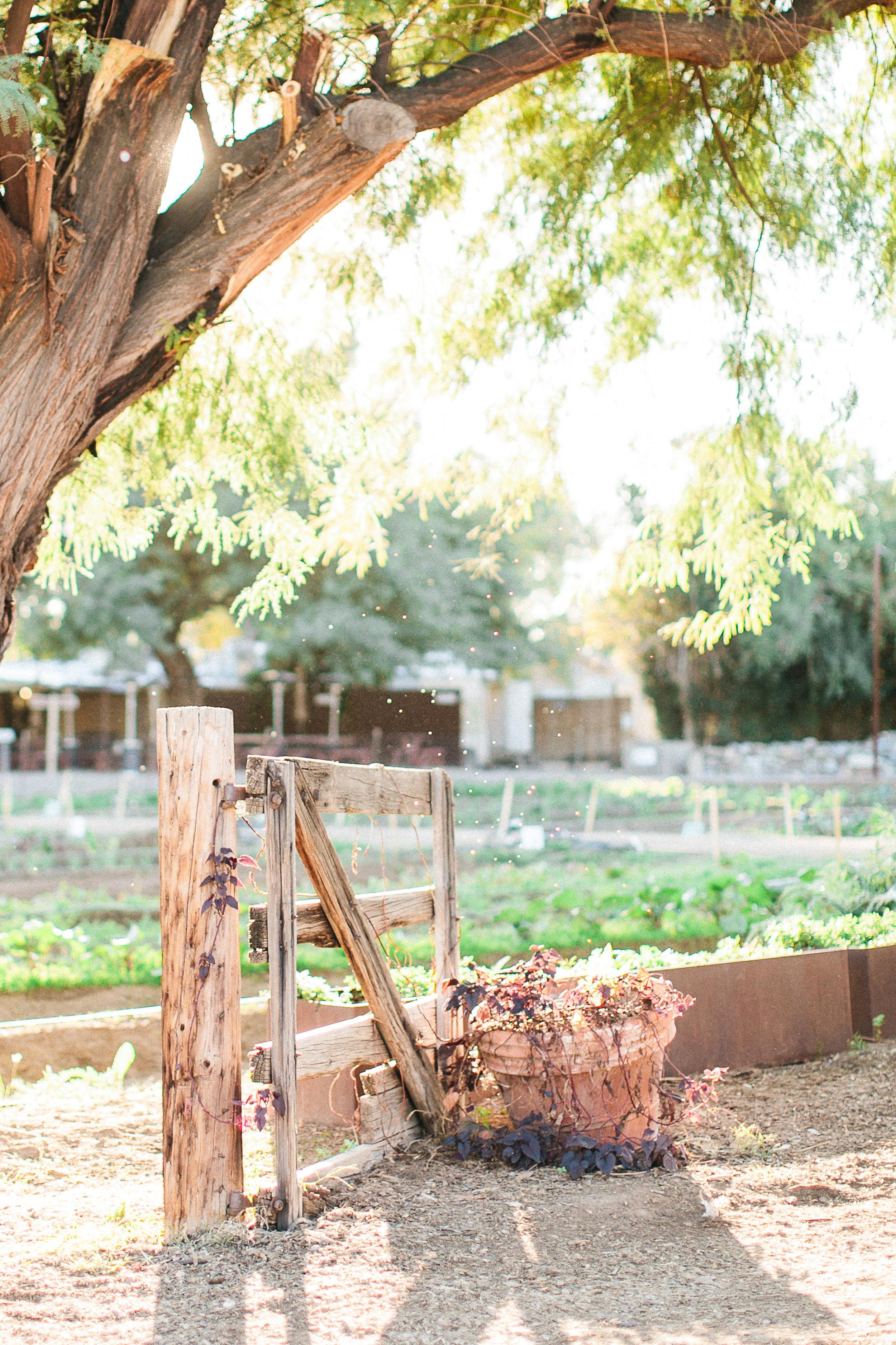 Arizona Engagement Shoot at The Farm: Alex & Charles- Konsider It Done- AZ Arizona Wedding & Event Planner, Designer, Coordinator Planning in Scottsdale, Phoenix, Paradise Valley, Tempe, Gilbert, Mesa, Chandler, Tucson, Sedona