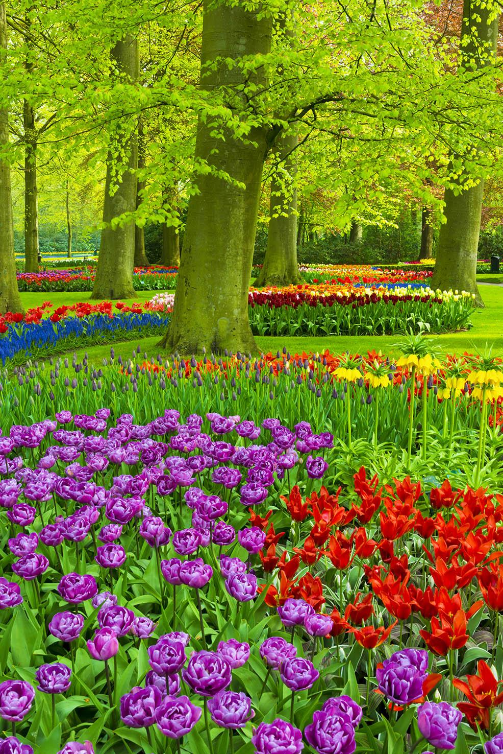 iStock_000025003619_Spring.jpg
