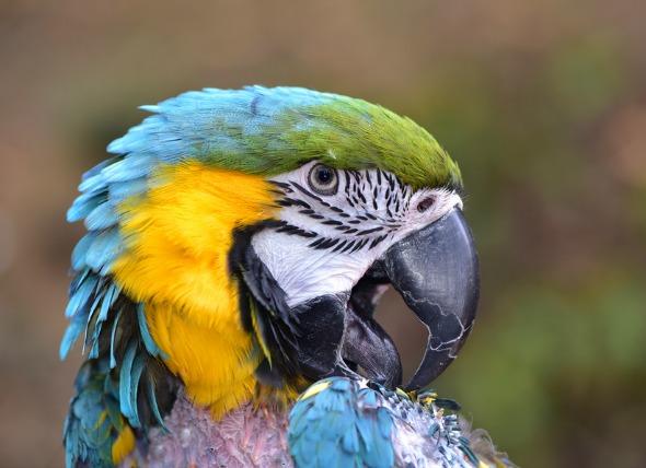 Feather Plucking Birds.jpg