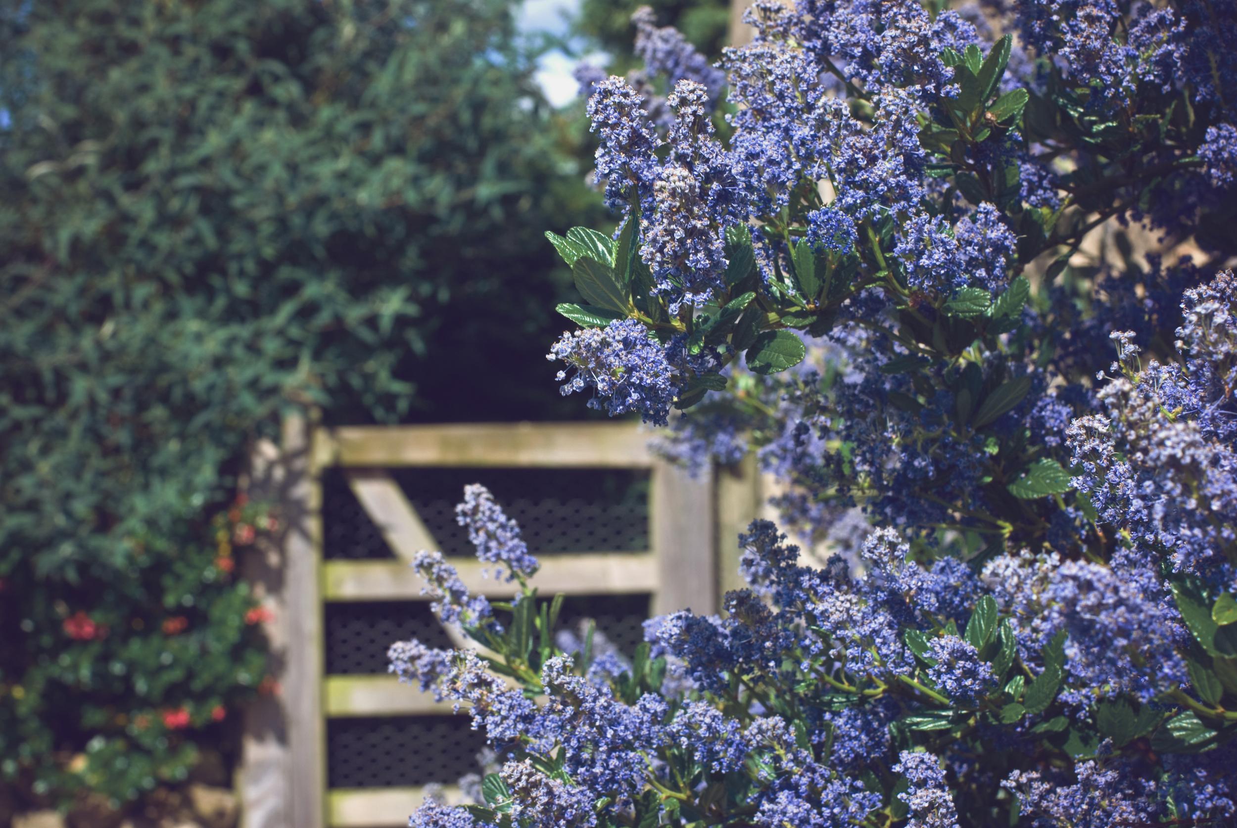 The Meadowbarn Garden