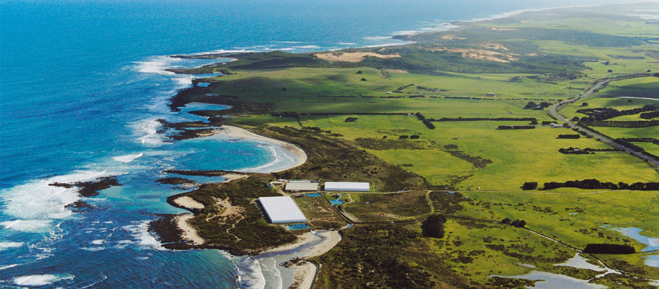 ocean-road-abalone-2.jpg