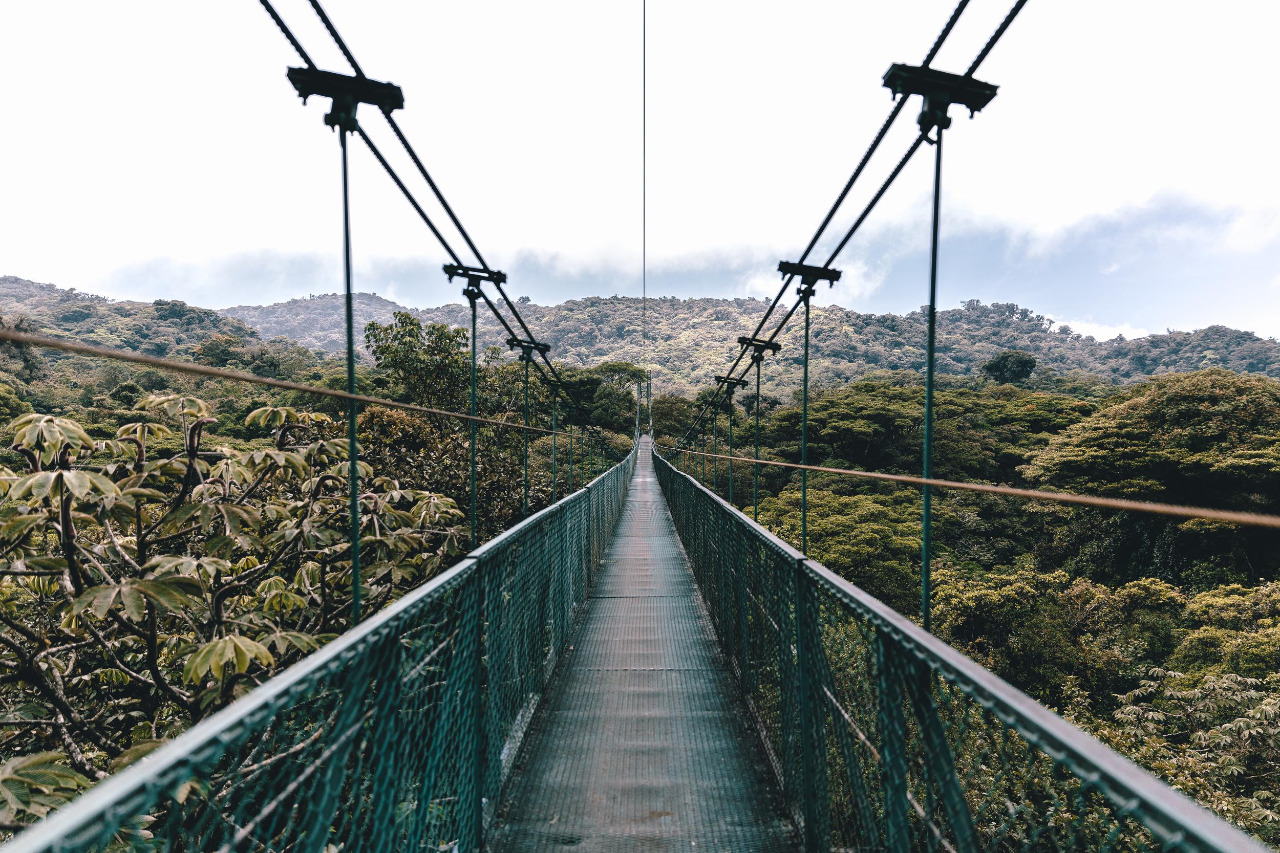 Cloud Rainforest_.jpg