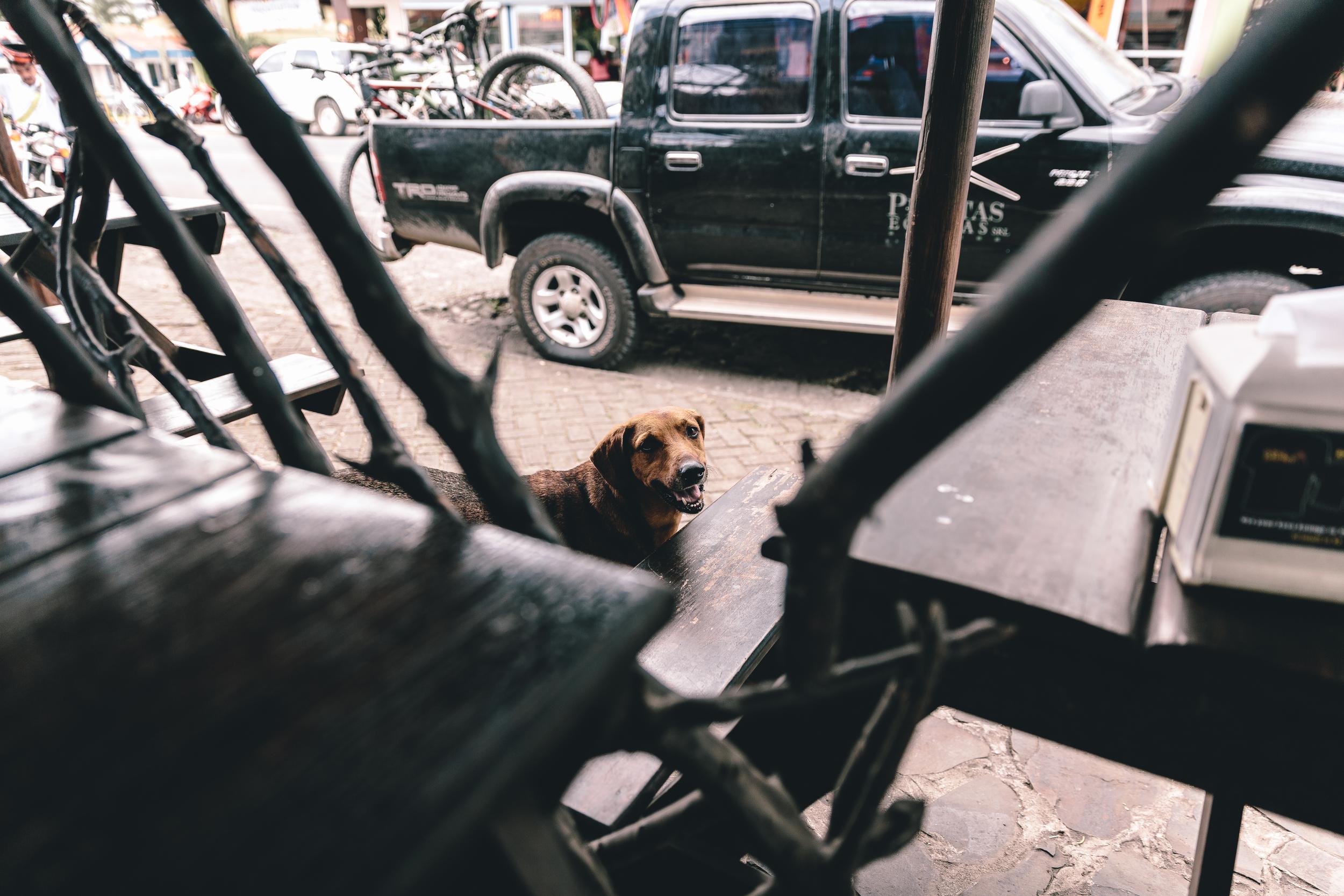 Stray Dog in La Fortuna_.jpg