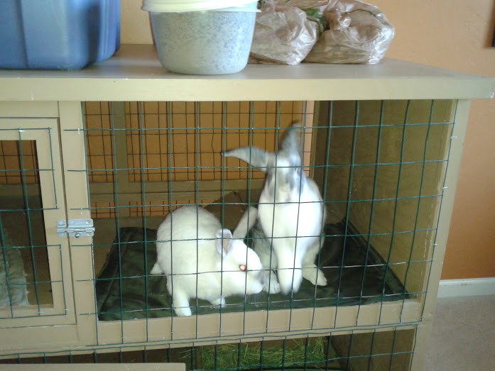 Bunnies2.jpg