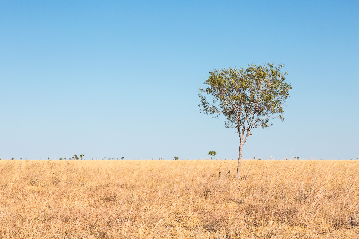 Two roos – roadkill seeks refuge   Gangalidda and Garawa country,Burketown, QLD 2015