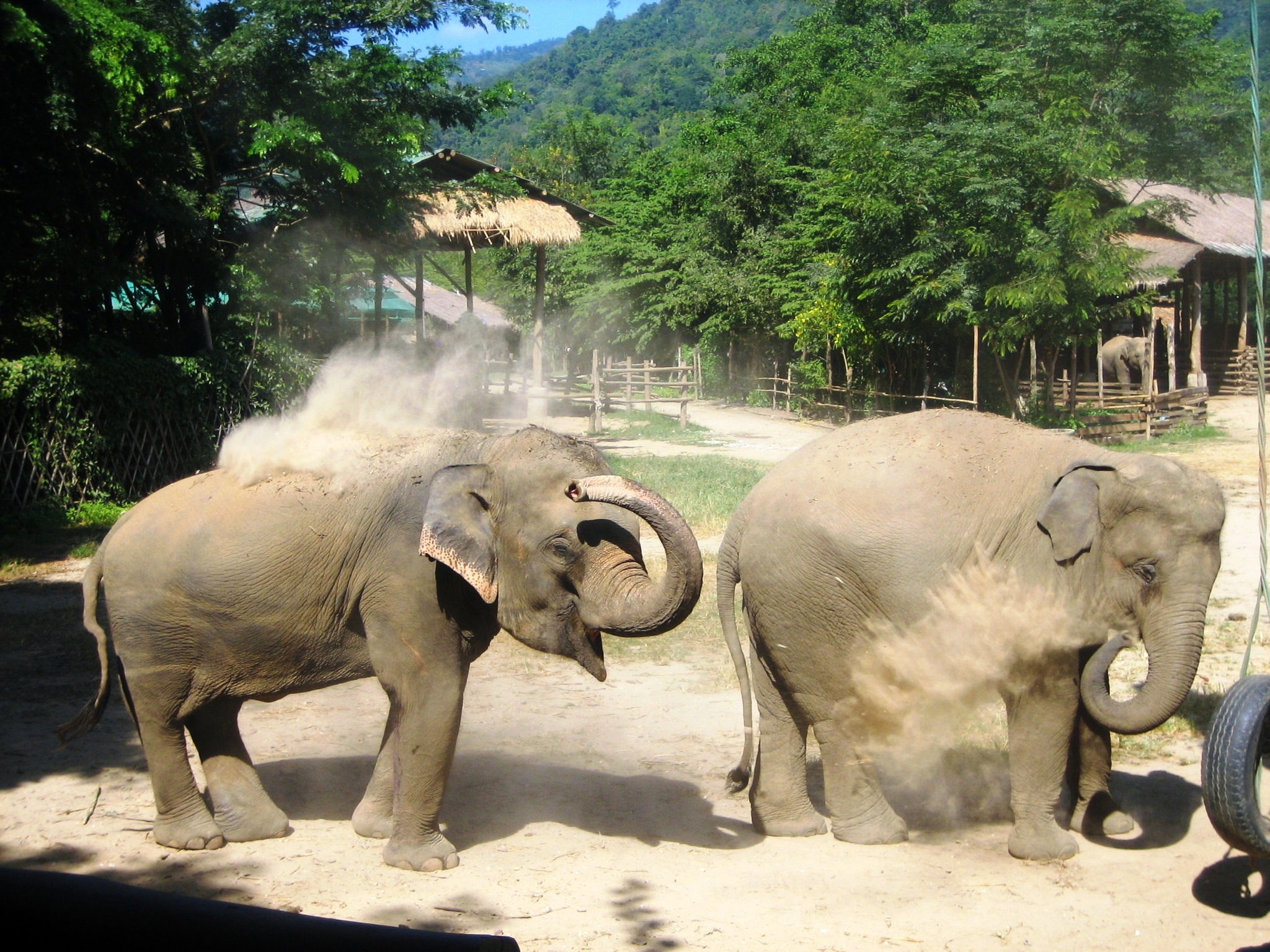 Two adolescent elephants playing at ENP.