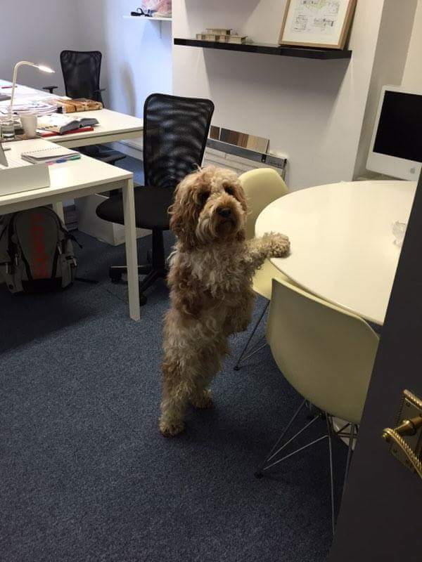 OB_Architecture_Office_Dog