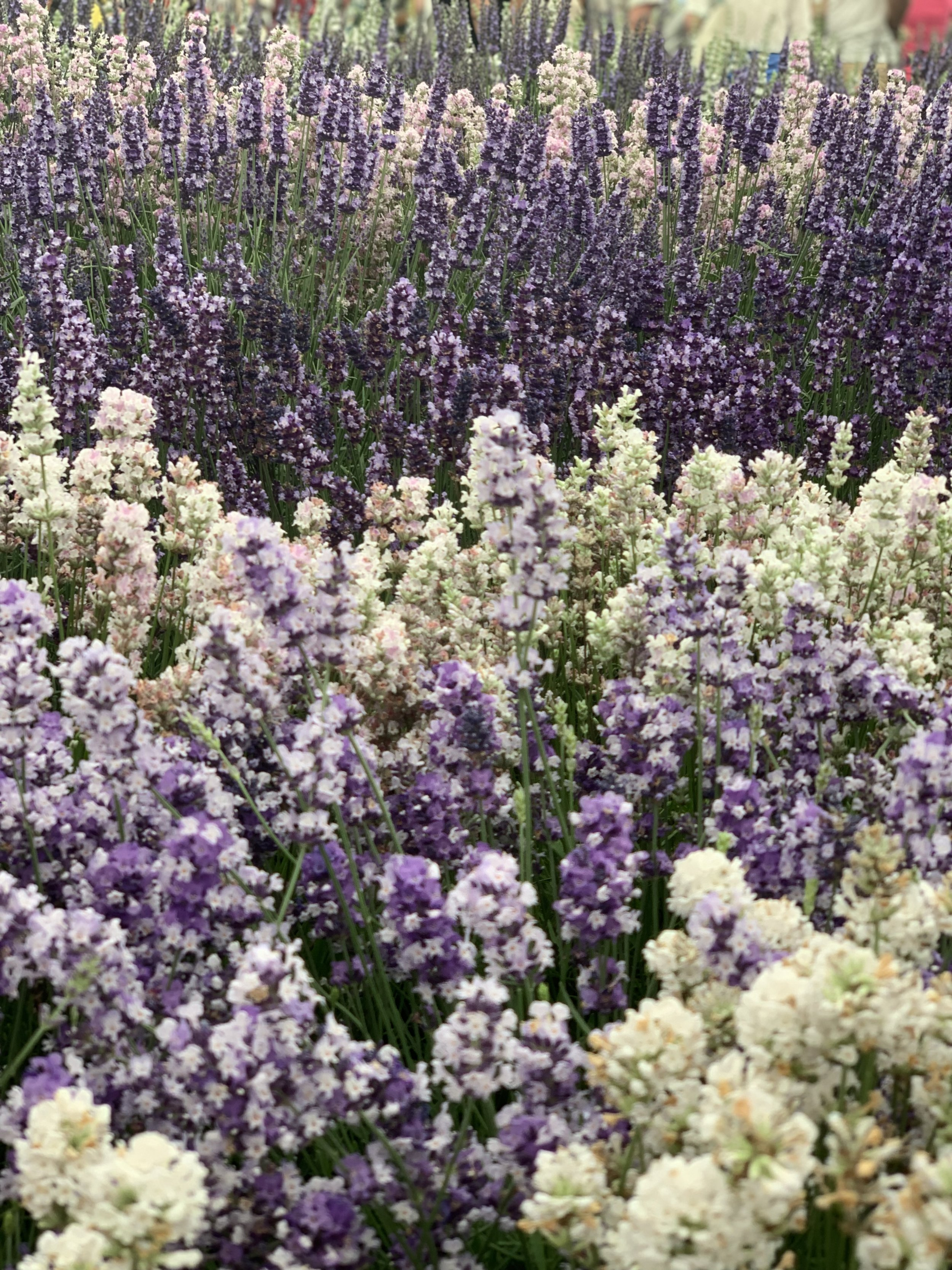Hampton Court Palace Flower Show   Vanilla Rose Weddings Monthly Round Up