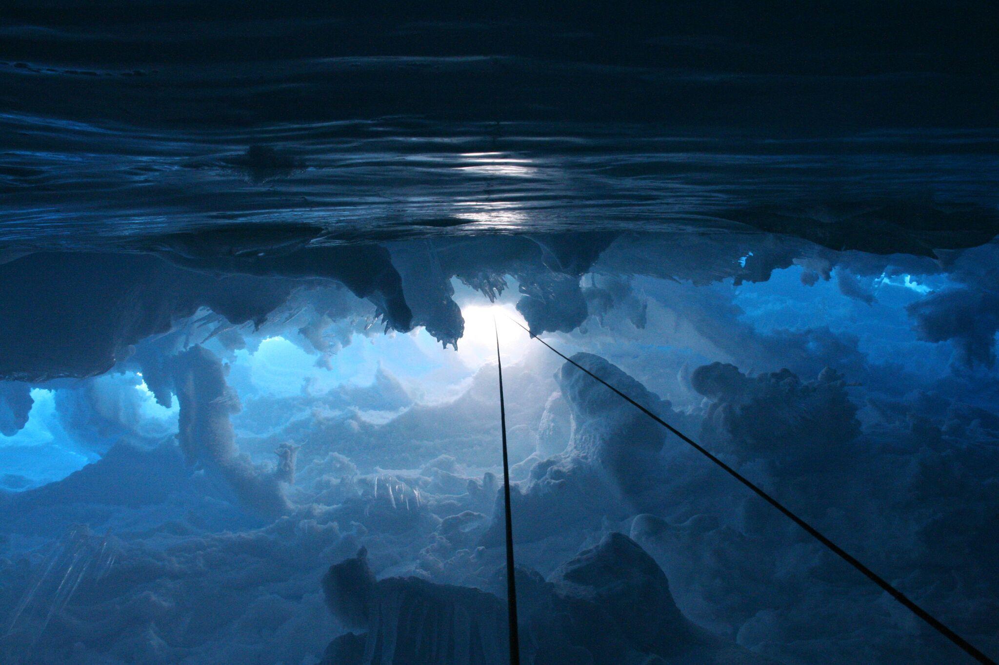 Polar Wandering, 2006 by Layla Curtis