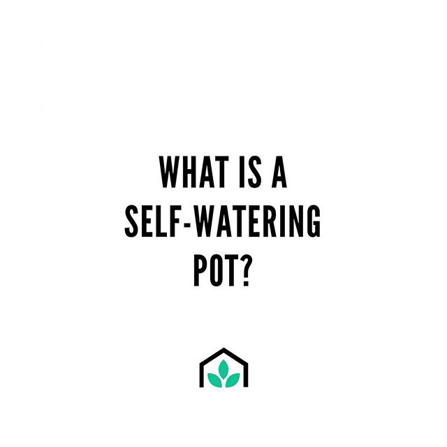 What is a self-watering pot? ⠀⠀ A self-watering pot is a growing container that, unlike other pots, has a built reservoir that catches and stores water to feed your plants regularly so that you don't have to. ⠀⠀ In these pots your plants have consistent access to water, so they are happier and healthier - and so are you! 😊  To learn how to create your own self-watering garden join GrowSPACE founder Daniel Koch as he teaches us how to create and plant your own self-watering pot on April 16 at @workshopmelbourne  Tickets available here: www.work-shop.com.au/event/self-watering-edible-gardens-growspace/ ✌️💚🥦