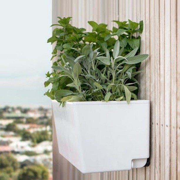 No space? No problem!  Our self watering pots are the perfect solution for growing more food in less space. Whether it be rooftop, courtyard, balcony or wall garden, at GrowSPACE, we'll get you growing 🌿  #growspace #wherepeoplegrow