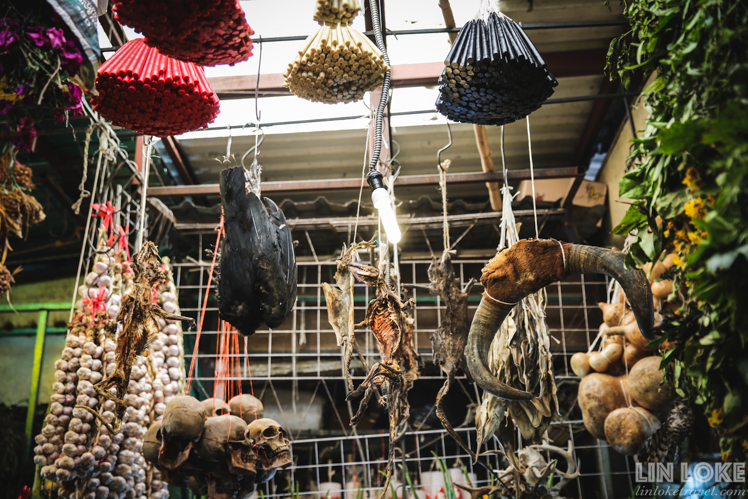 Animal carcasses and other items used in spiritual rituals for sale at Mercado de Sonora.